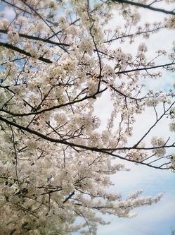 2015-04-04-12-51-41_deco.jpg